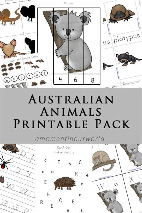 australian animals printable pack  moment   world