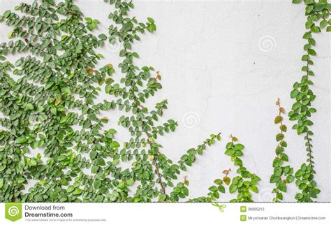 Green Wall Climbing Plants  Google Search Plantgreen
