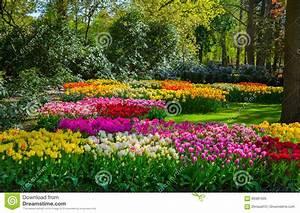Tulpen Im Garten : bunte tulpen im keukenhof arbeiten holland im garten ~ A.2002-acura-tl-radio.info Haus und Dekorationen