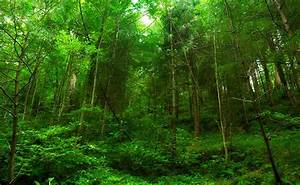 The New Law To Conserve And Protect Forests By Bhupender Yadav