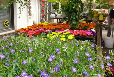 Blumenpflanzen › Gitterseeflorist In Dresden