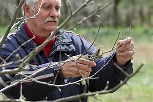 Apfelbaum Schneiden Wann : apfelbaum schneiden den richtigen zeitpunkt finden ~ A.2002-acura-tl-radio.info Haus und Dekorationen