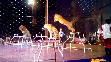 sirkus moscow  bandar lampung youtube