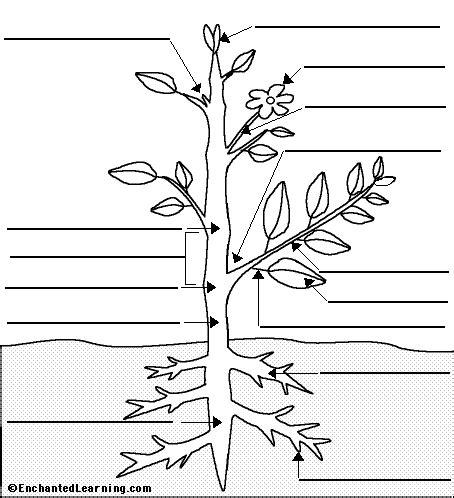 label flowering plant anatomy glossary enchantedlearningcom