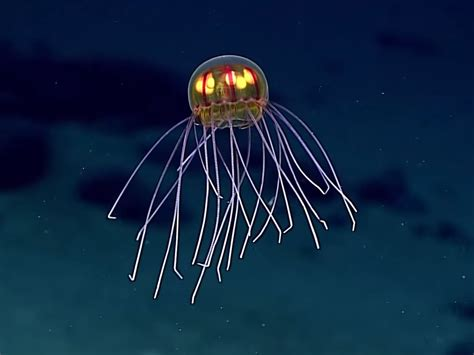 New Species Of Jellyfish Was Discovered Miles Under The Sea • Capital Wired
