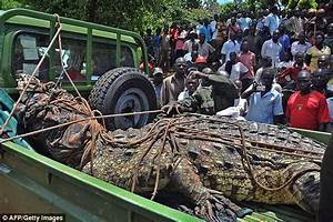 Man-eating crocodile suspected of killing six people ...