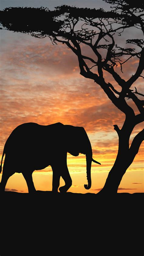 Wallpaper Iphone 8 Elephant by Elephant Wallpaper For Iphone X 8 7 6 Free