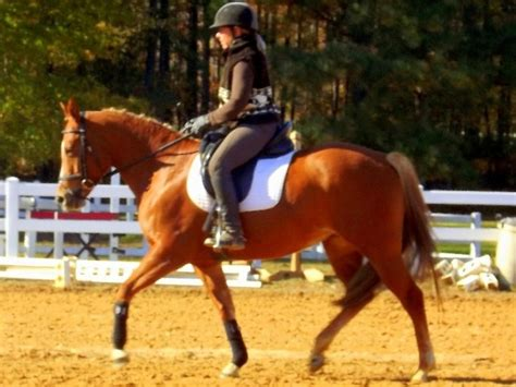 quarter horses horse dressage western years american mare cute