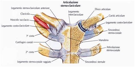 dolore gabbia toracica destra articolazione sterno clavicolare cliccascienze