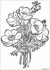 Coloring Poppies Pages Bouquet Printable Drawing Five sketch template