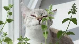 Laver Un Chaton : cultivez les herbes dont votre chat raffole chat cat ~ Nature-et-papiers.com Idées de Décoration