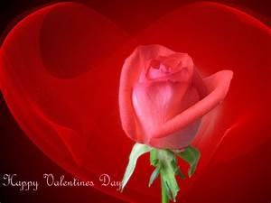Happy Valentines Day Rose Pics Wallpaper #12161 Wallpaper ...