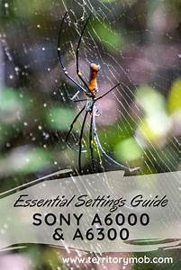 Essential Settings Guide For Your Sony A6000