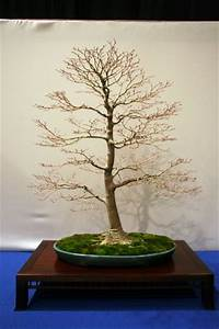 Bonsai Baum Schneiden : schneiden ~ Frokenaadalensverden.com Haus und Dekorationen