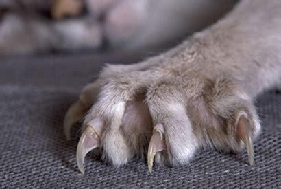 comment eviter les griffes de chat sur canape comment choisir le bon arbre 224 chat consobrico