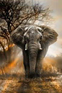 Majestic Elephant Animals