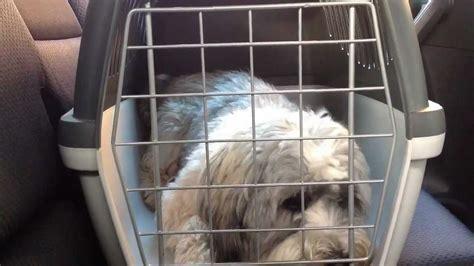 im auto hund im auto transportieren hundetransport