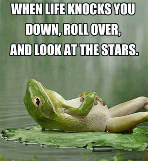 Funny Life Memes - when life knocks you down