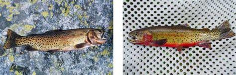 fish rocky mountain national park  national park service