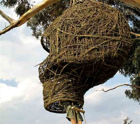 weaver nest eco homes weaver s nest following birds for carbon neutrality ecofriend