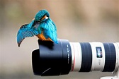 nature, Animals, Birds, Colibri (bird), Camera, Canon ...