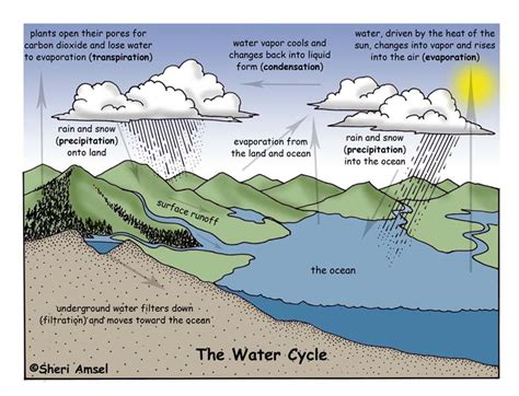 The Water Cycle Diagram Pdf by Saladogt Patterns In The Water Cycle