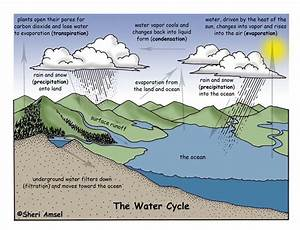 Saladogt    Patterns In The Water Cycle