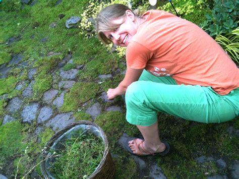 cultiver et planter les mousses d 233 coratives au jardin