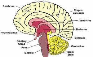 The Woman Without A Cerebellum