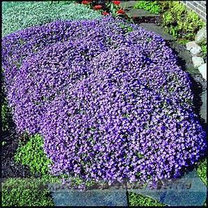 Online Get Cheap Purple Ground Cover -Aliexpress.com ...