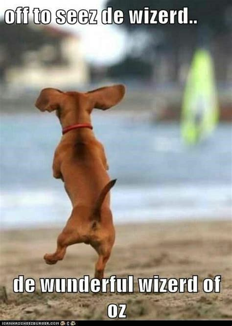Dog Doing Happy Dance Funny