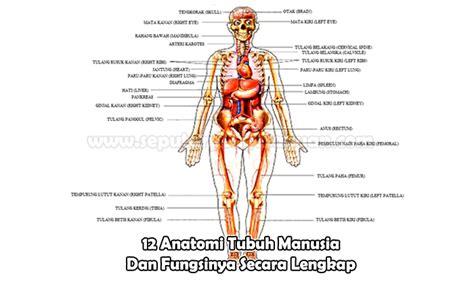 Gambar Rahim Wanita Beserta Fungsinya 12 Anatomi Tubuh Manusia Dan Fungsinya Secara Lengkap