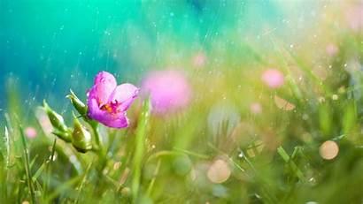 Rain Nature Flowers Macro Backgrounds Desktop Wallpapers
