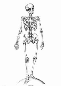 Download Anatomy Skeletons Wallpaper 1240x1750 | Wallpoper ...