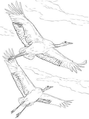 red crowned cranes  flight coloring page supercoloringcom