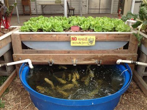 conheca  sistema de producao de hortalicas  peixes em pequenos espacos  esta revolucionando