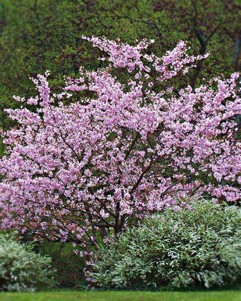 arbusti da fiore sempreverdi vivaio vendita arbusti da fiore provincia vicenza vivai