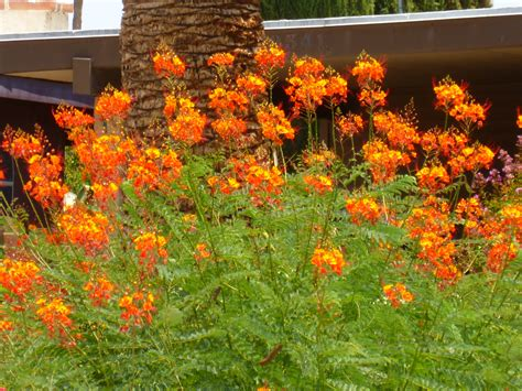 Orange Flowering Plants Gallery