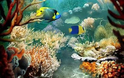 Ocean Wallpapers Fish Tropical 3d Reef Aquarium