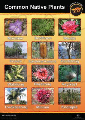 awabakal native plants poster