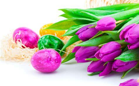 purple tulip flowers  easter eggs