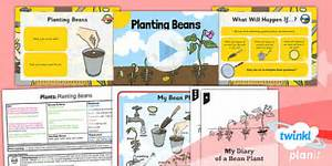 Plants Science Year 1 Lesson  Growing Beans In The Classroom