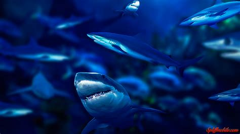 Animated Shark Wallpaper - megalodon wallpapers 183