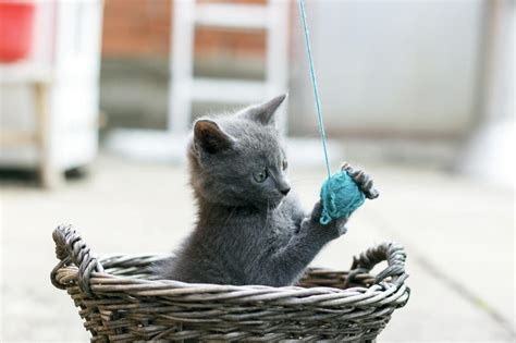 potential dangers  cat toys animal planet