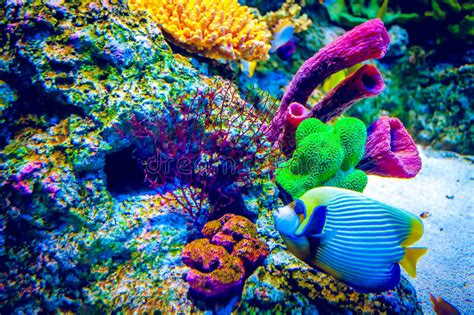 Coral Reef And Tropical Fish Stock Photo Image Of Fish