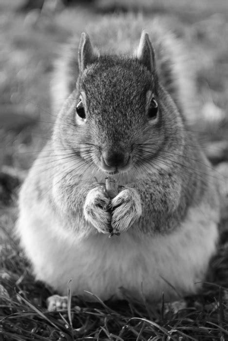 shoot urban wildlife    cute examples