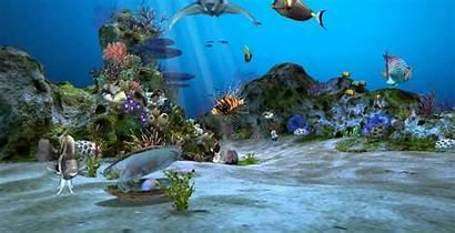 Aquarium Wallpapers 3d Exotic Uhd Amazingly Desktop