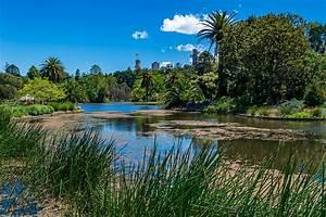 Bilder Von Palmen : fotos von melbourne australien natur park teich palmen ~ Frokenaadalensverden.com Haus und Dekorationen