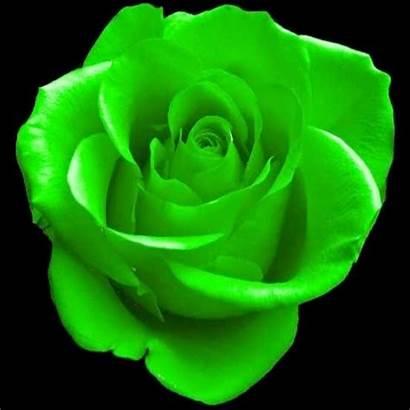 Rose Clipart Warna Rahsia Bunga Going March