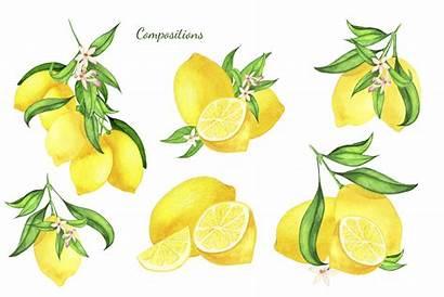 Lemon Clipart Watercolor Wreath Frame Clip Graphic